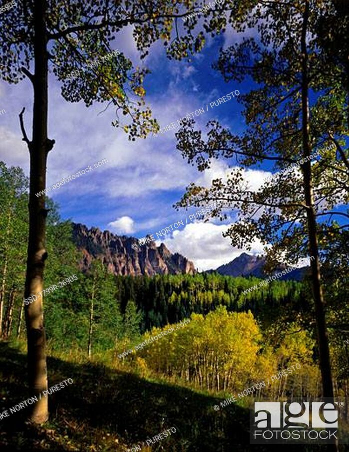 Imagen: Aspen trees in a forest with a mountain in the background, Uncompahgre National forest, Colorado, USA.