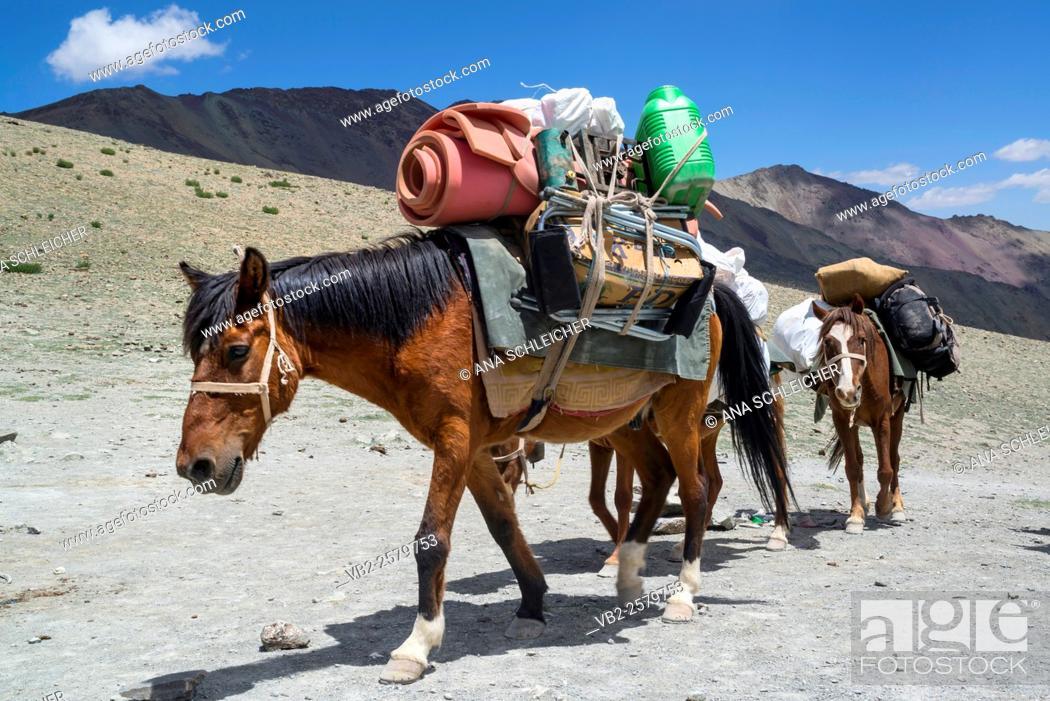 Stock Photo: Horse caravan. Trekking in Markha valley (Laddakh, India).