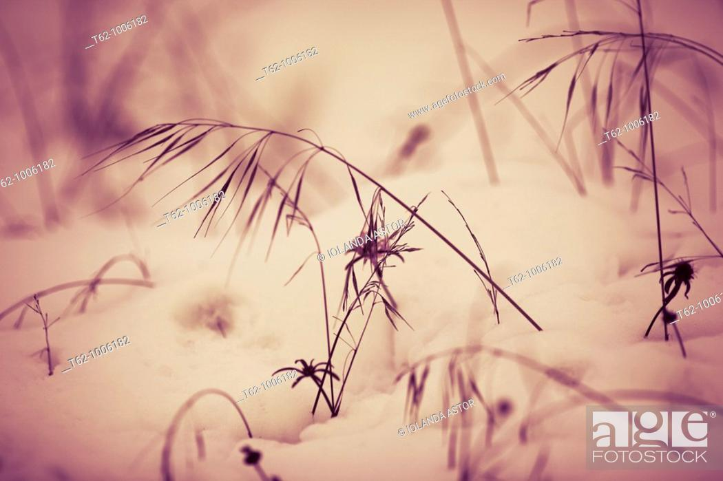 Stock Photo: Shrubs in the snow  Color  Abstract.