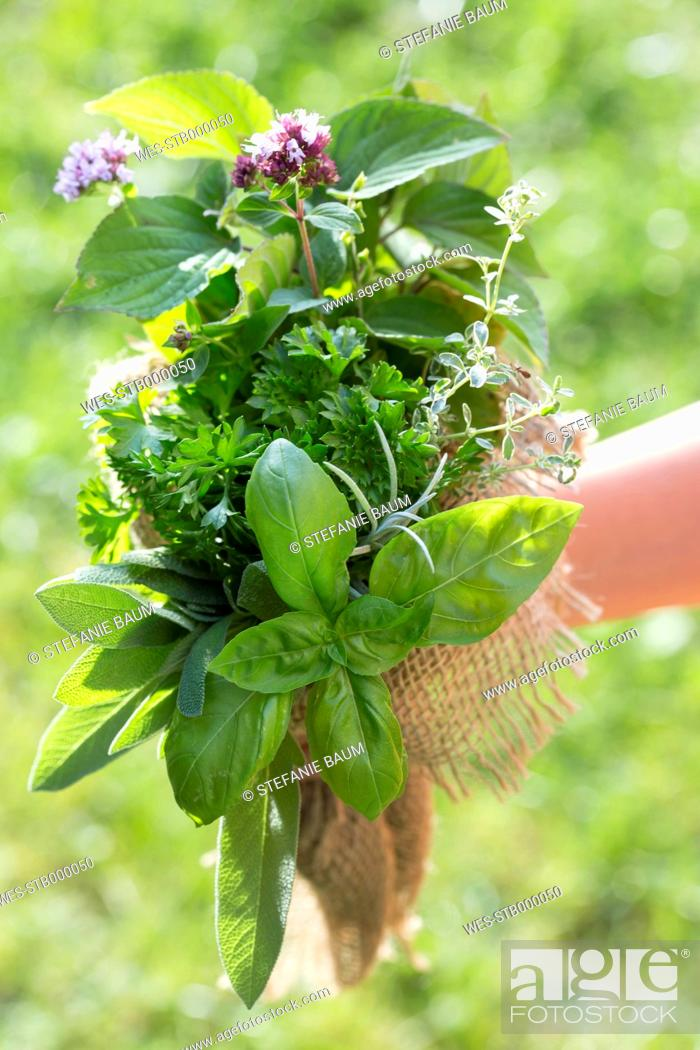 Stock Photo: Germany, Bavaria, Girl holding bunch of fresh herbs, close up.