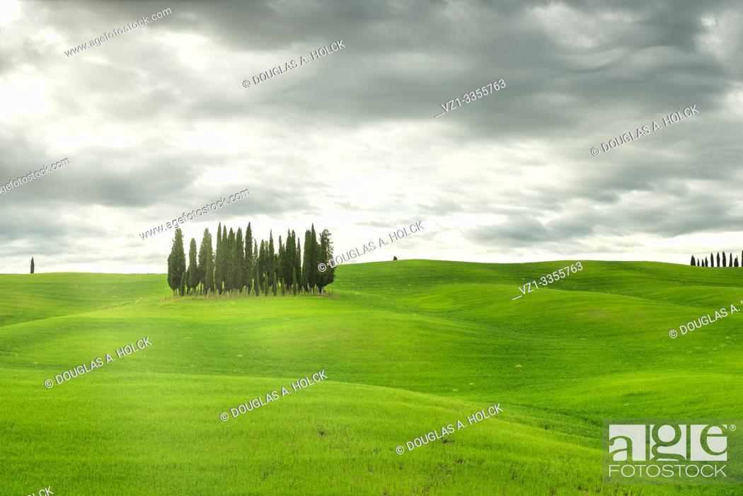 Imagen: Tuscany Italy Cypress Grove Val d'Orcia World Location.