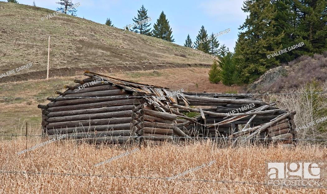 Stock Photo: This photo is an old turn of the century log cabin homestead located near Molson, WA on Fletcher Hill that is debilitated with the roof in process of caving in.