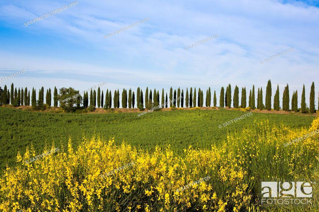 Stock Photo: Trees and plants on a hill, Siena, Siena Province, Tuscany, Italy.