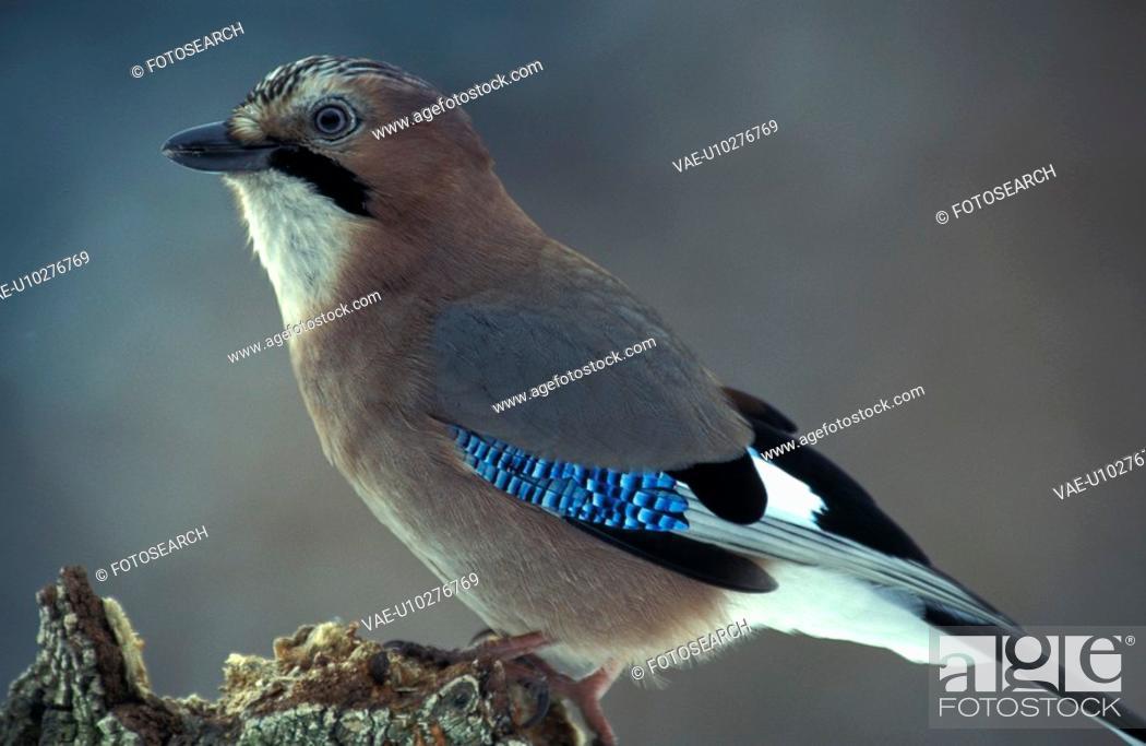 Stock Photo: aves, bill, beak, animals.