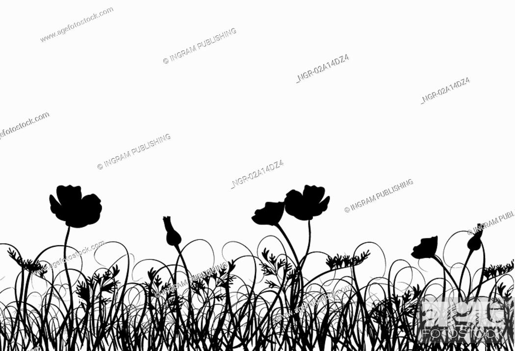 Stock Photo: Grass and poppy, vector.
