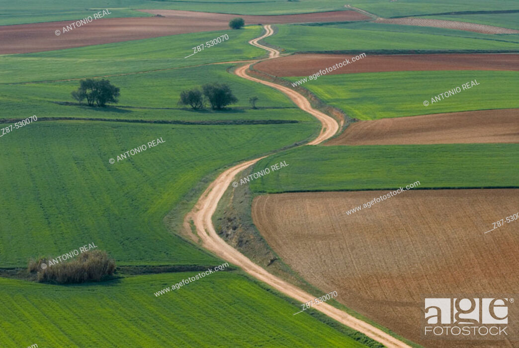 Stock Photo: Fields in La Mancha. Tresjuncos. Cuenca. Ruta de Don Quijote. Castilla-La Mancha. Spain.