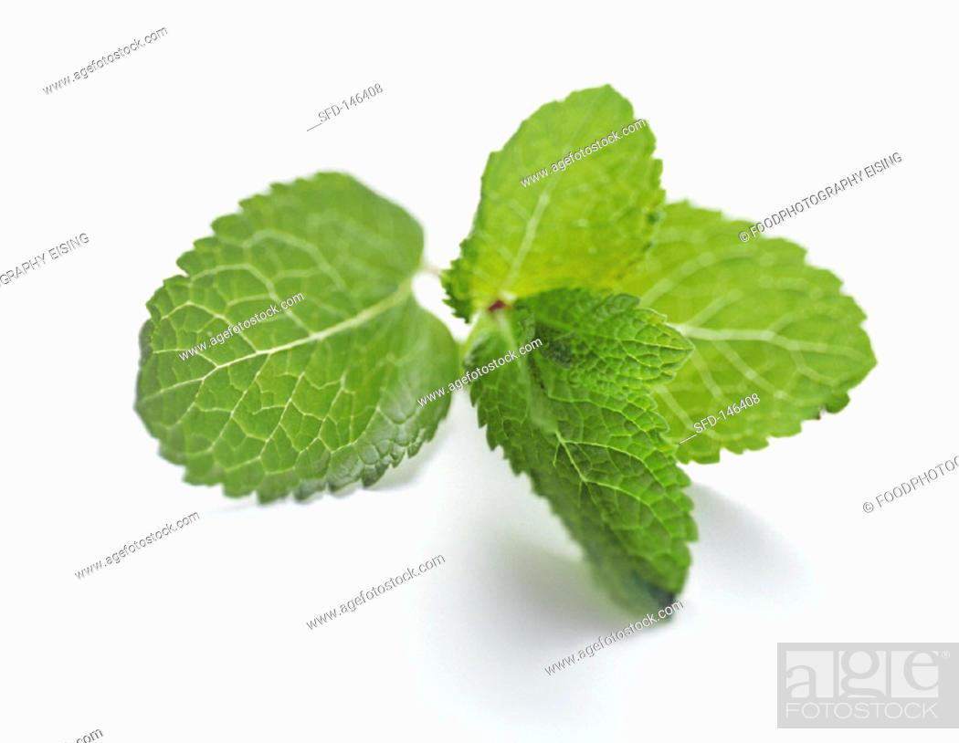 Stock Photo: Fresh Leaves of Mint.