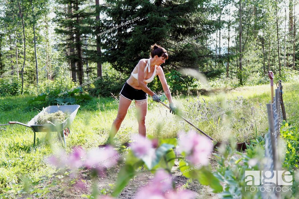Stock Photo: Woman working in garden, Norrbotten, Sweden.