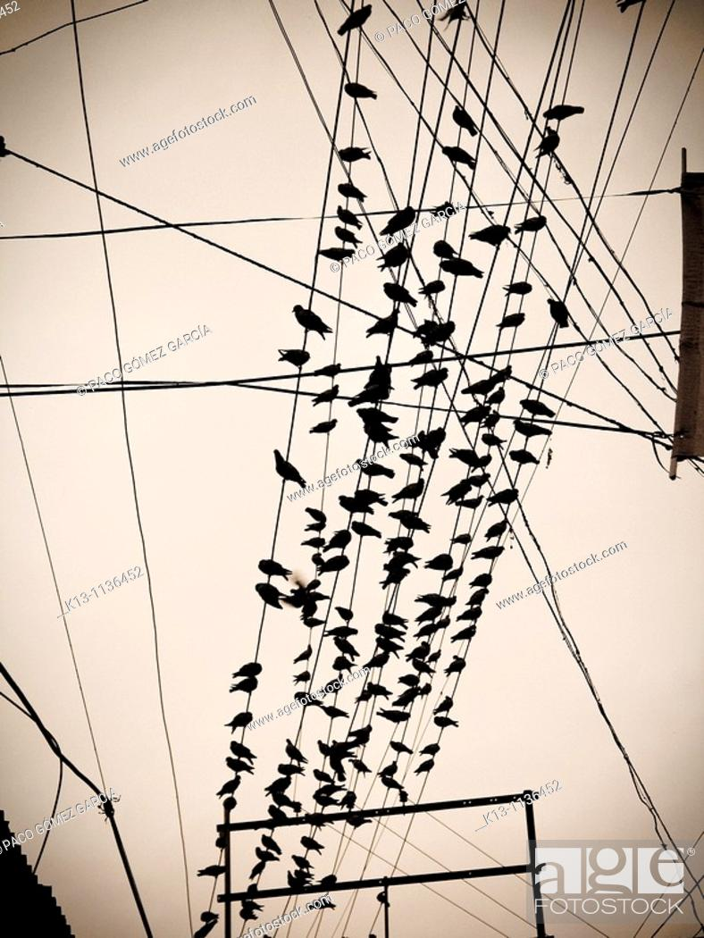 Stock Photo: Birds in a cable  India.
