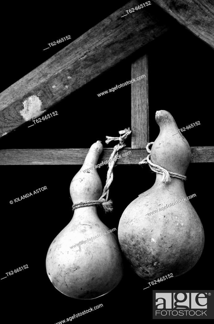 Stock Photo: Gourds.