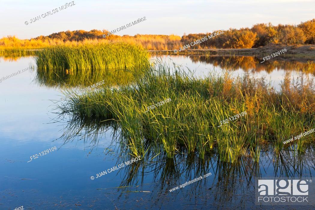 Stock Photo: Azraq Wetlands Nature Reserve, Jordan, Middle East.