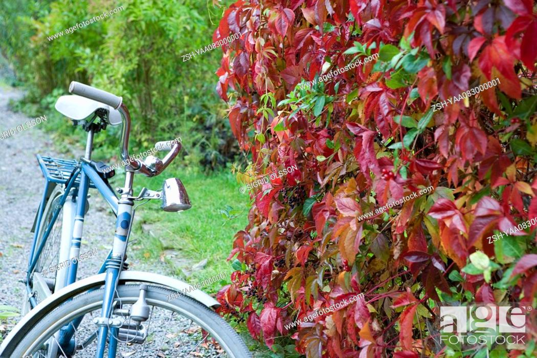 Stock Photo: Bicycle parked next to hedge.