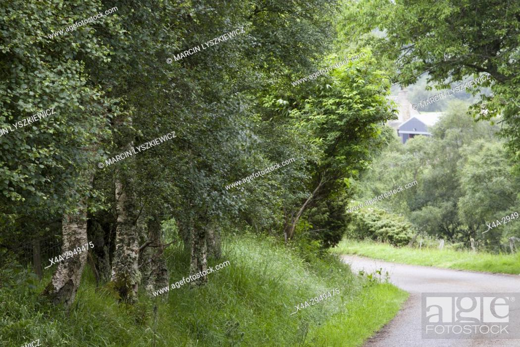 Stock Photo: Road in Cairngorms National Park, Scotland, UK.