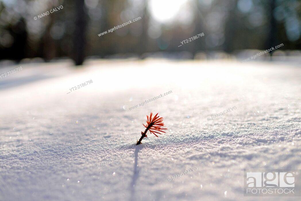 Stock Photo: Winter landscape in Kakslauttanen Arctic Resort, Saariselka, Finland.
