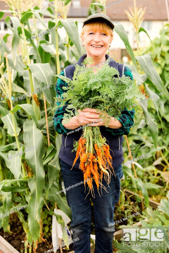 Stock Photo: Senior woman holding freshly harvested carrots from the allotment.