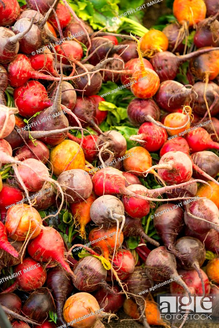 Stock Photo: Canada, BC, Saltspring Island, Ganges. Red, purple and golden organic beets for sale at the Ganges Sunday Farmers Market.
