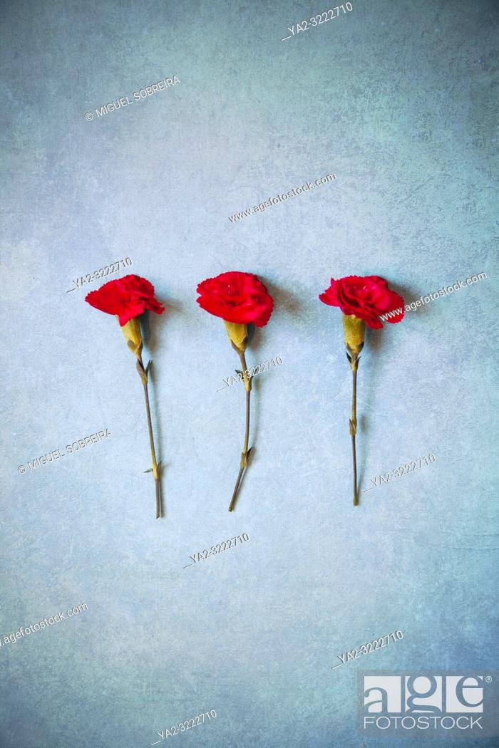 Imagen: Three Red Carnations.