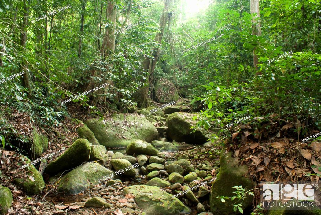 Stock Photo: Jungle Trial of Gunung Garding Sarawak, Malysia.
