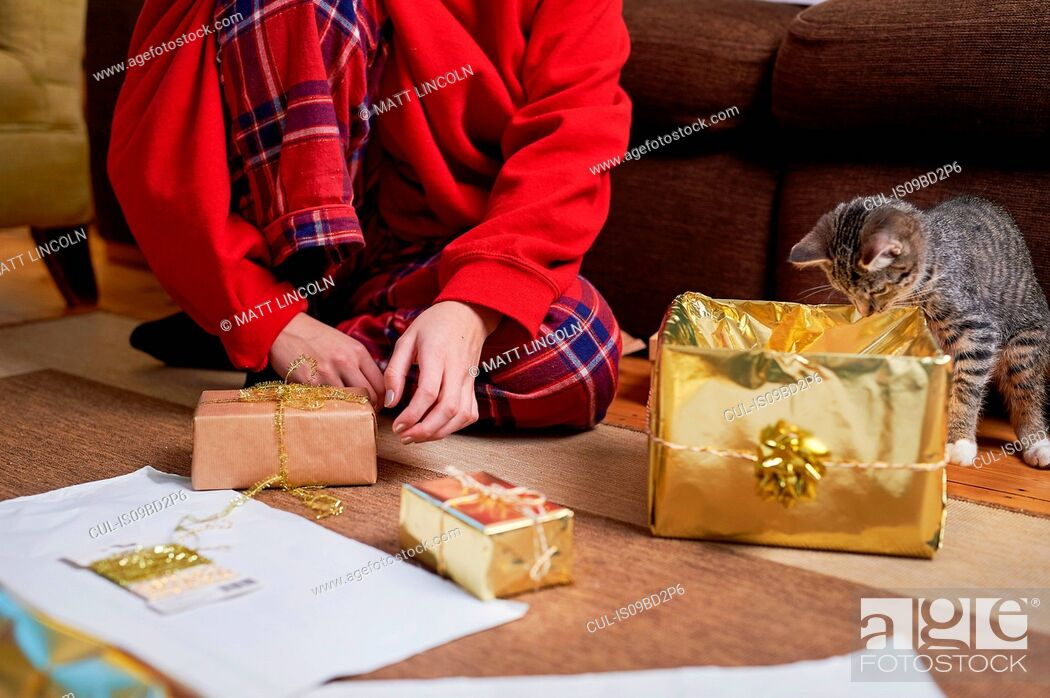 Stock Photo: Young woman sitting on living floor wrapping gifts with curious cat, neck down view.