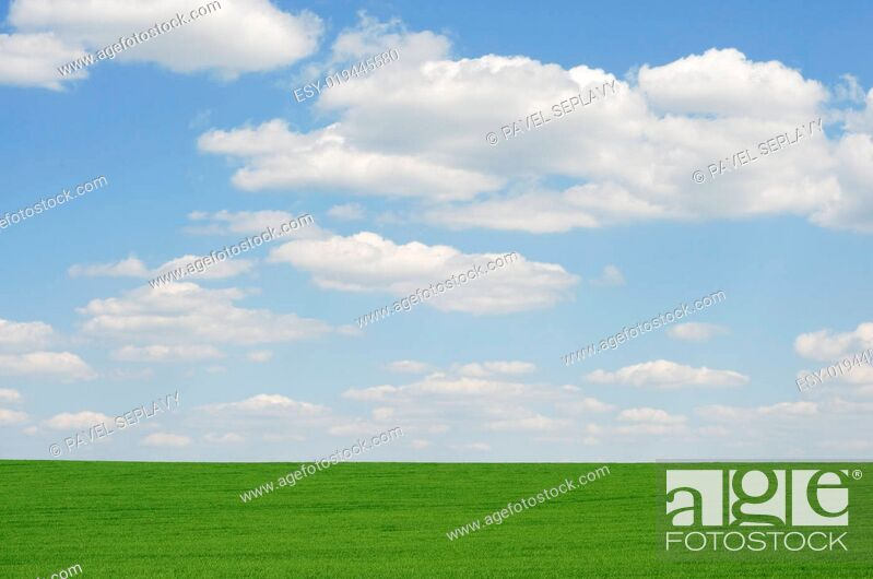 Stock Photo: Field and sky.