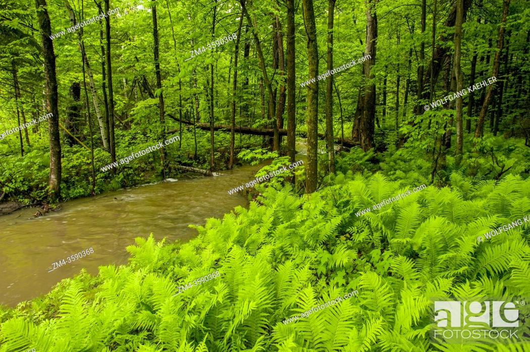 Stock Photo: A small creek is running through a deciduous forest in Montebello in the Laurentians in Quebec Province, Canada.