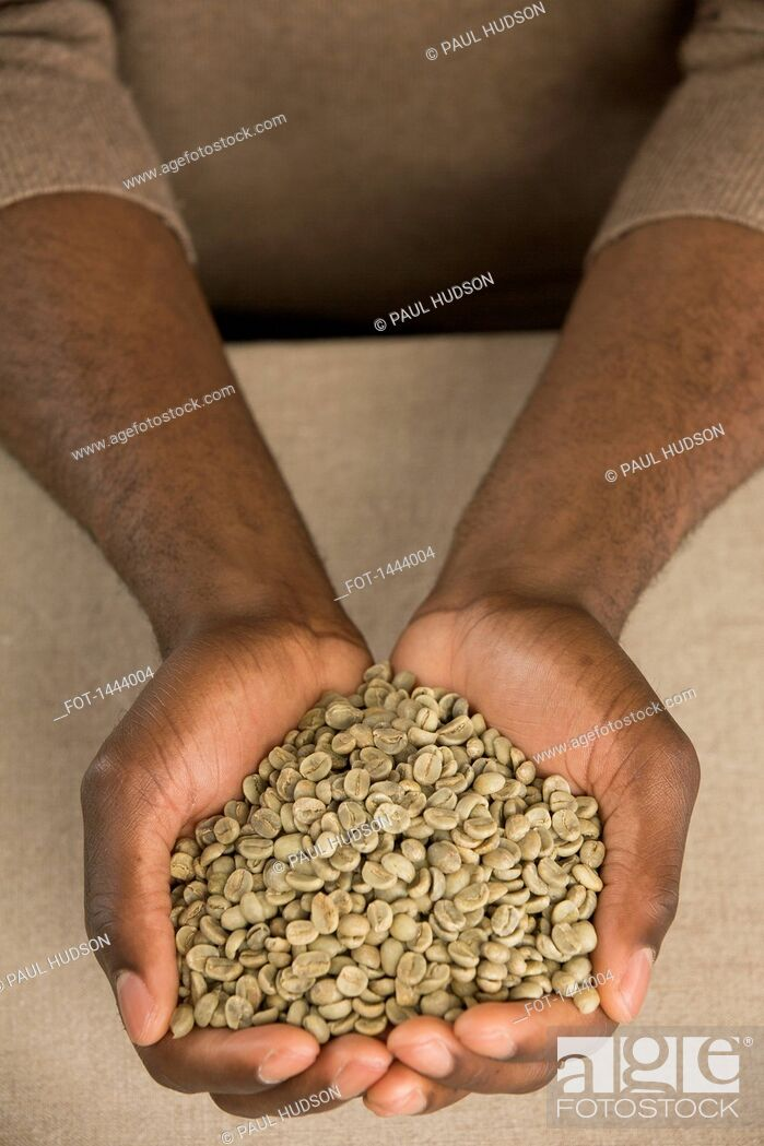 Stock Photo: Cropped image of man holding raw coffee beans in cupped hands at table.