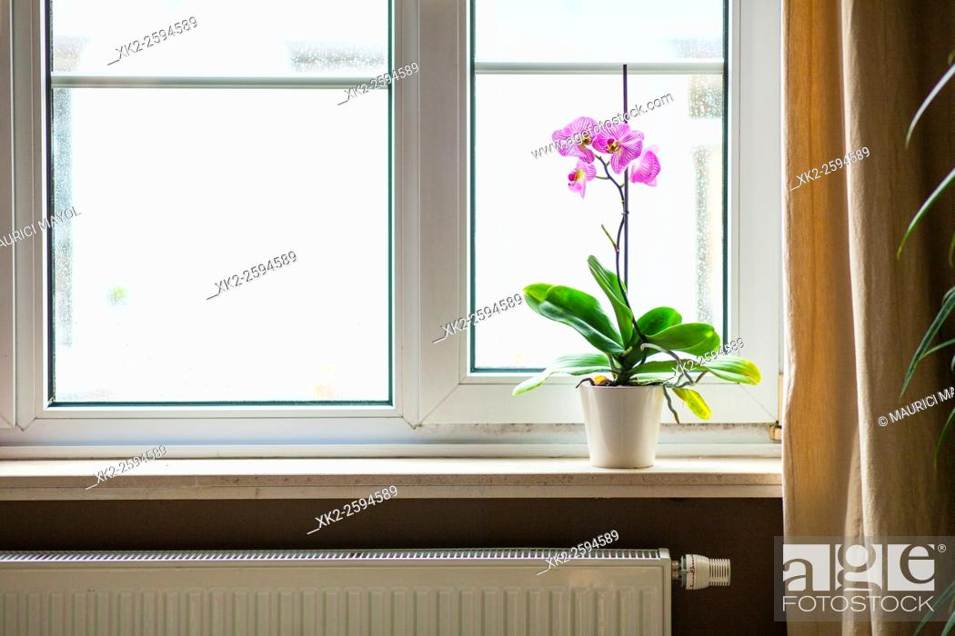Stock Photo: Gas heating and home cozyness with nice Orchid.