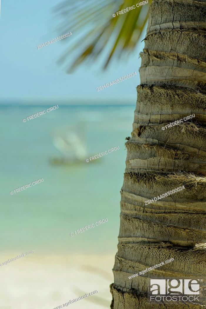 Stock Photo: Close-up of palm tree trunk on beach.