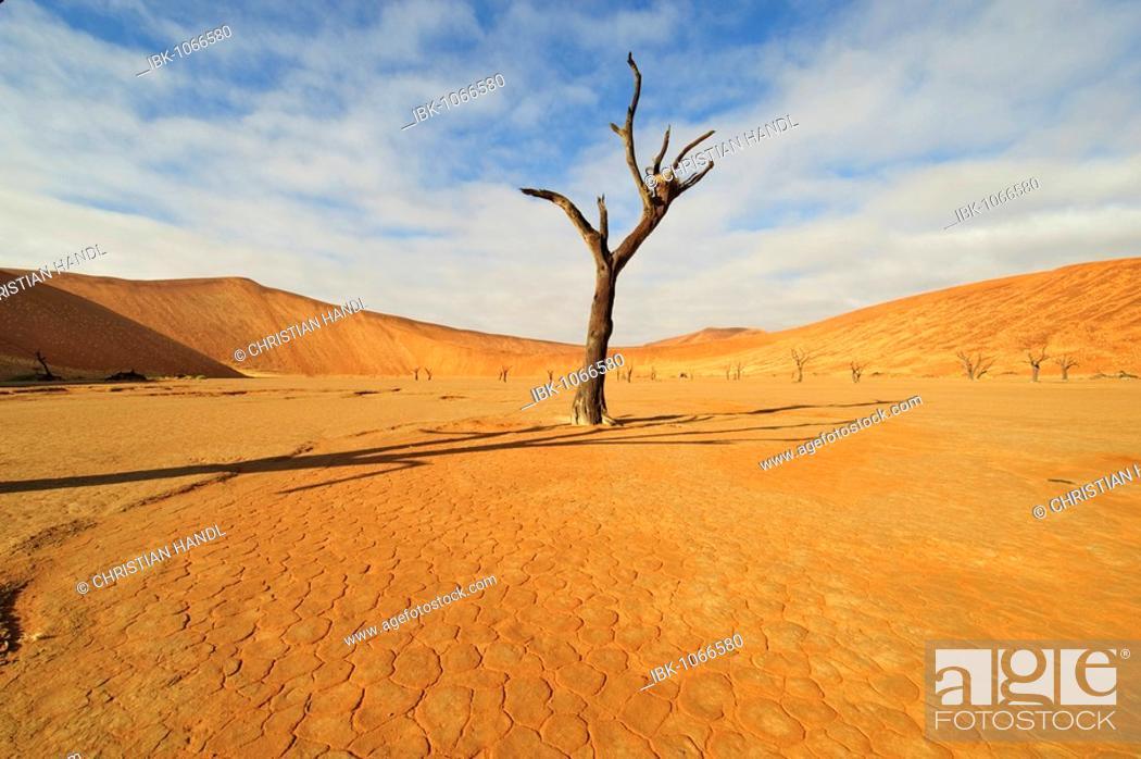 Stock Photo: Dead Vlei in the Namib Desert with dead Camel Thorn Tree (Acacia eriloba), Namibia, Africa.