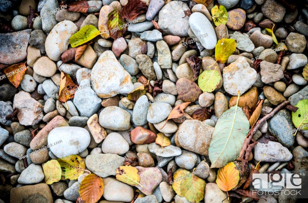 Stock Photo: Sea stones and fallen leaves in autumn, close-up.