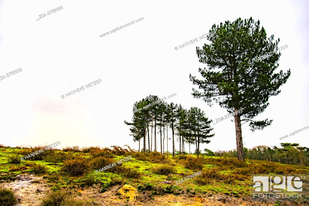 Stock Photo: Winter woods, The Netherlands, Europe.