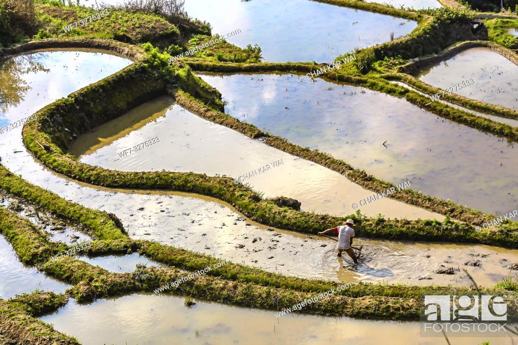Stock Photo: Yuanyang County, Yunnan, China - 2014: A farmer plowing and harrowing the rice paddy fields at Yuanyang rice terraces.