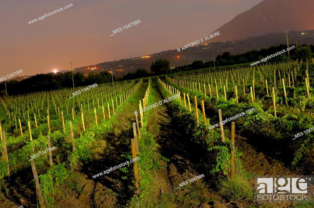 Stock Photo: night landscape with large wineyard.