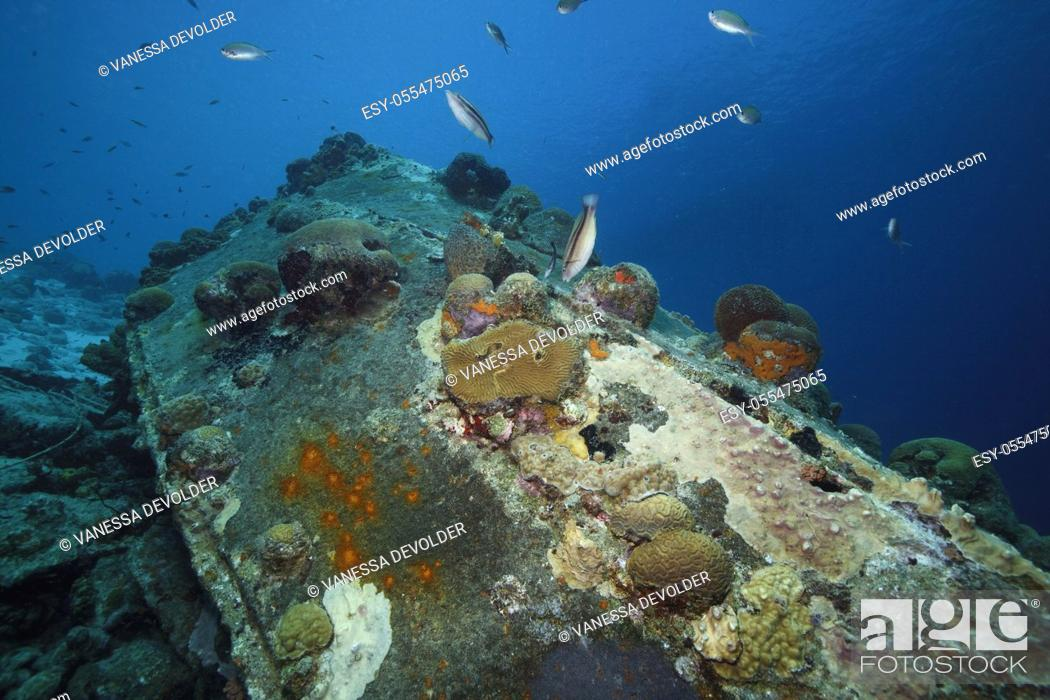 Stock Photo: Detail of a shipwreck with corals in the Caribbean sea around Bonaire.