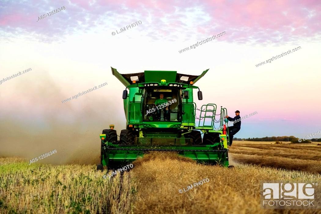 Stock Photo: A farmer jumps on a moving combine to join his son while harvesting canola at sunset; Legal, Alberta, Canada.