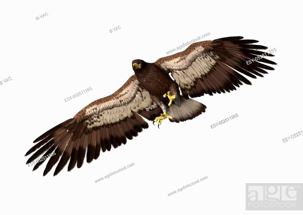 Stock Photo: 3D rendering of a bald eagle isolated on white background.