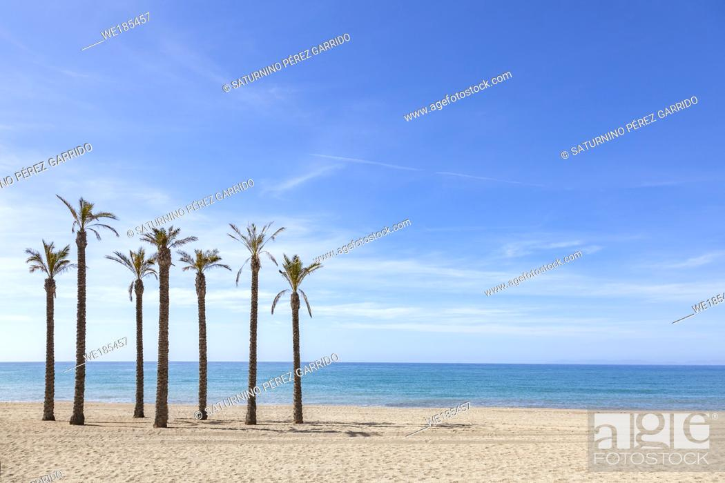 Stock Photo: Set of palm trees located in a solitary beach and a blue sky.