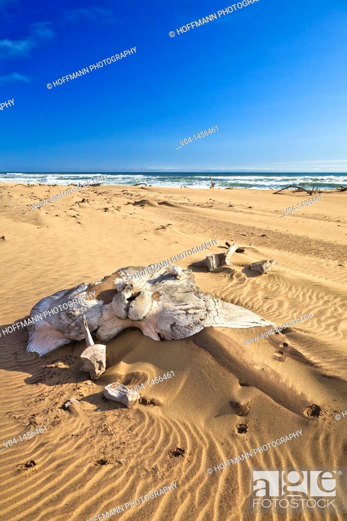 Imagen: Whale bones on the shore in the Skeleton Coast Park, Namibia, Africa.