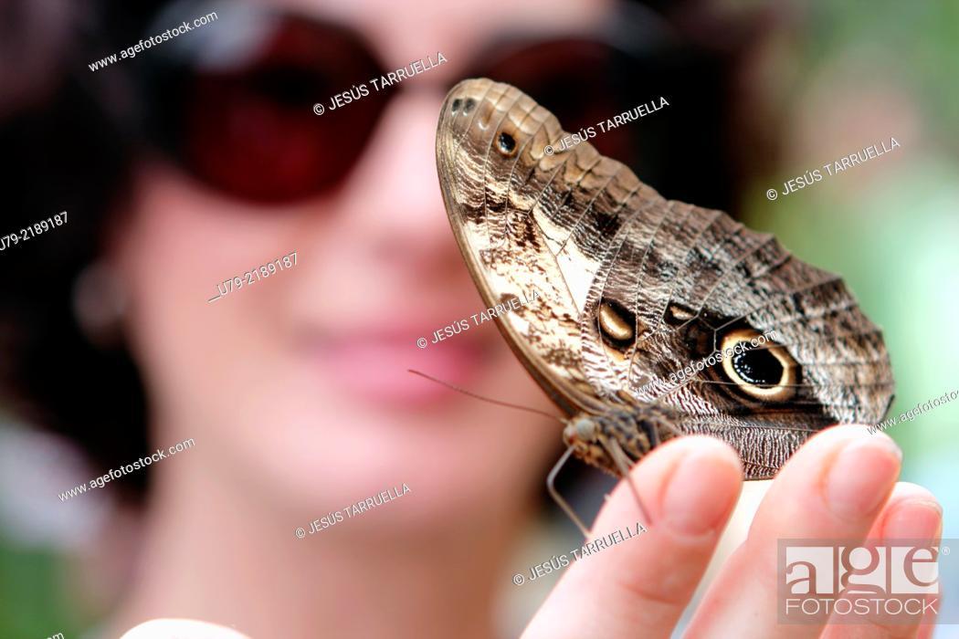 Stock Photo: Caligo memnon butterfly on woman hand.