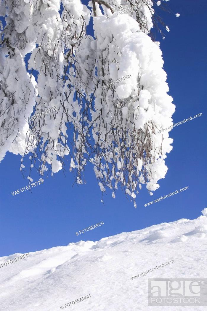Stock Photo: Bare Tree, Blue, Branch, Clear Sky, Covering.