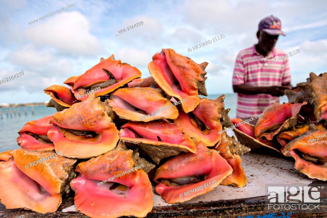 Photo de stock: Live fresh conch at the fresh fish market Montagu beach Nassau, Bahamas.