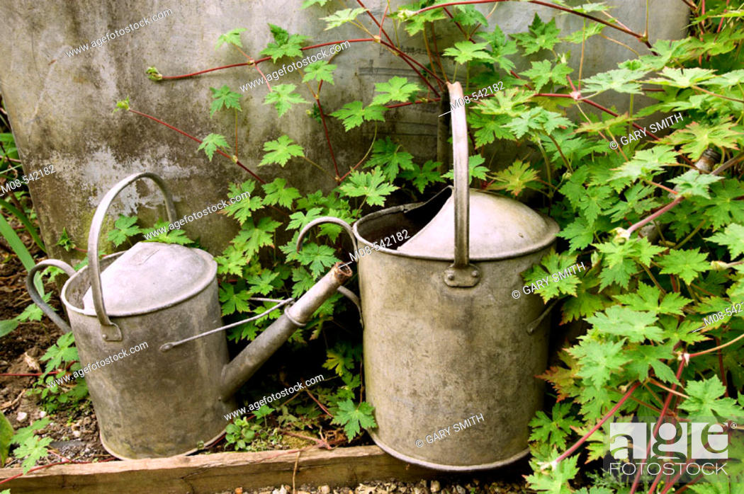 Stock Photo: Traditional rustic galvanised watering cans by old water butt.