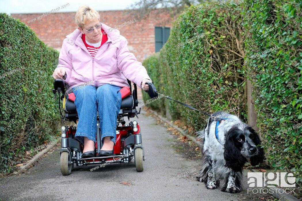 Stock Photo: Wheelchair user talking dog for walk.