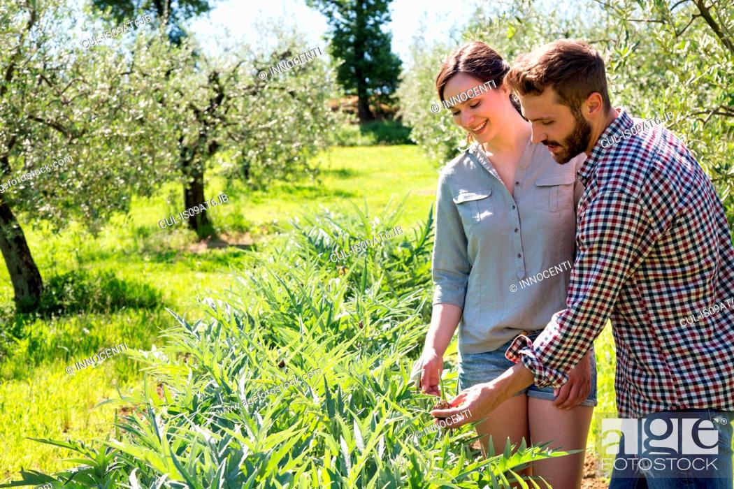 Stock Photo: Young couple standing looking down at purple artichoke plant.