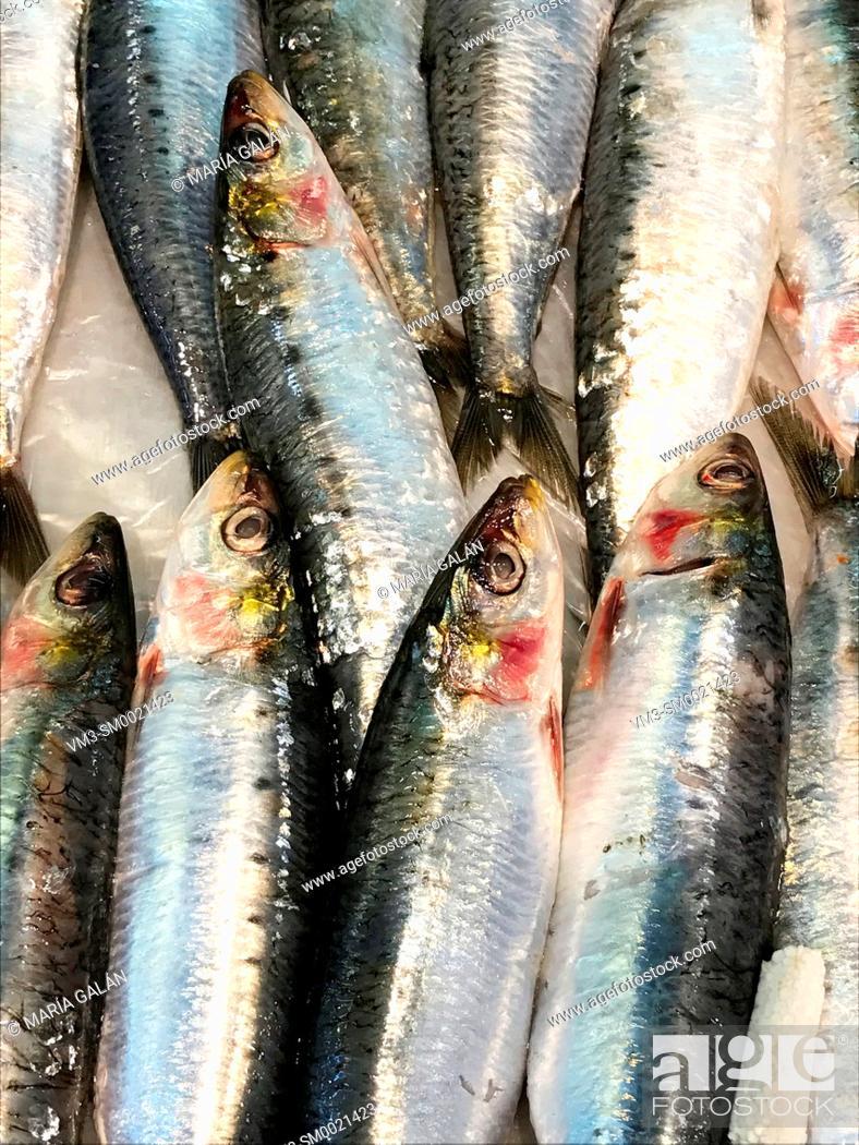 Stock Photo: Sardines, close view.