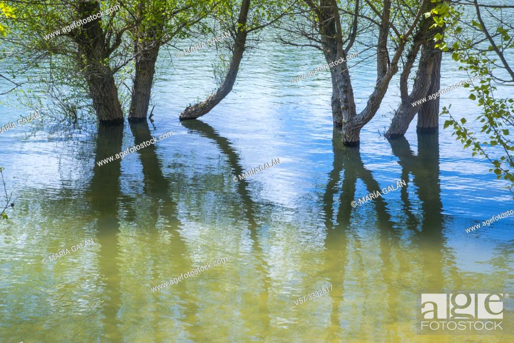 Stock Photo: Trees and their reflections on water.