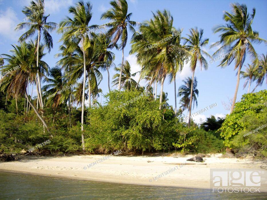 Stock Photo: Deserted paradisiac beach with coconut trees east of Thong Sala, Koh Phangan, Thailand.