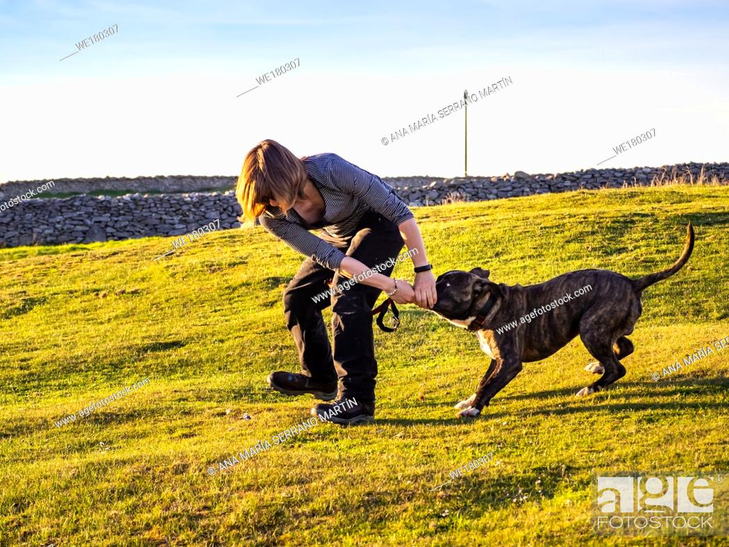 Imagen: An adult woman playing with a young dog of the American staffordshire breed in countryside in springtime.
