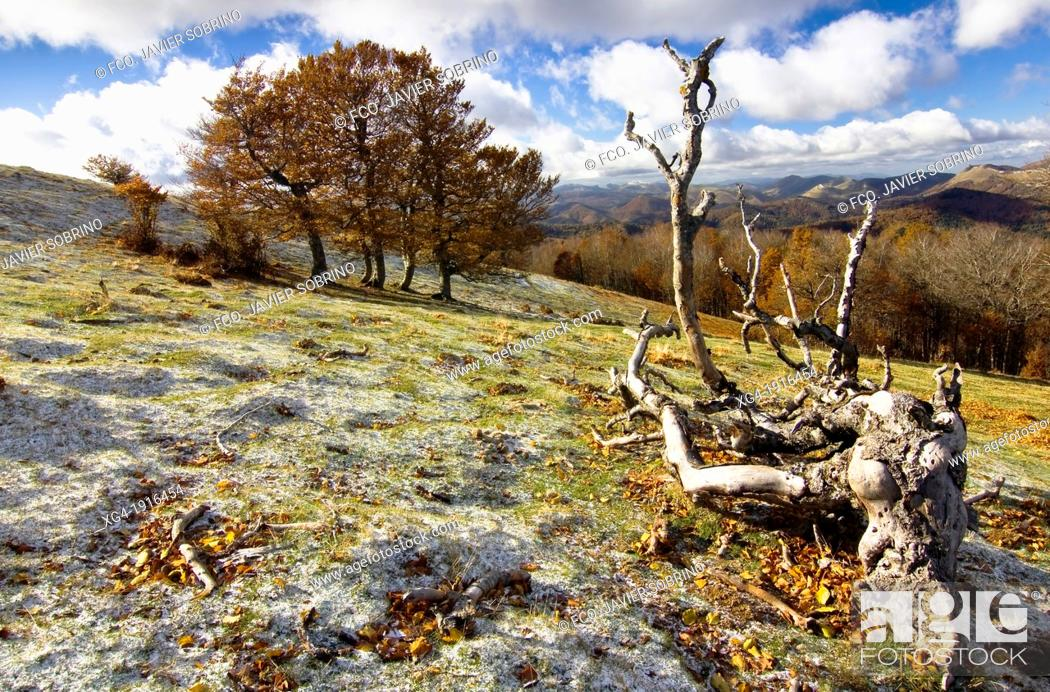 Stock Photo: Irati forest from the Sierra de Abodi - Navarre Pyrenees - Navarra - Spain - Europe.