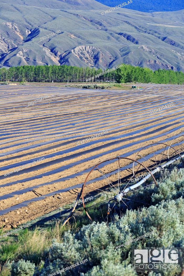 Stock Photo: Field prepared for planting melon crop, Ashcroft, British Columbia.